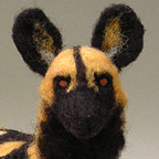 African Wild Dog / Painted Dog